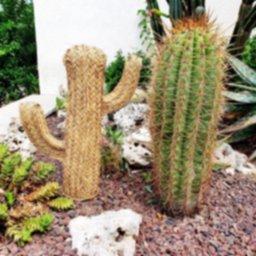 Cactus-de-esparto-53h-Lacasaeco-scaled-e1597824970103.jpg